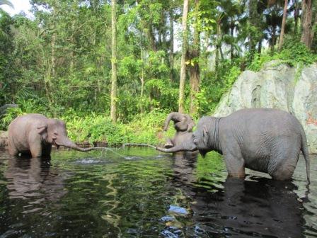 Disney World Magic Kingdom Jungle Cruise Elephants