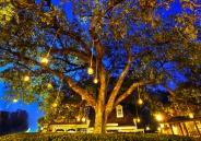 Liberty Square Tree